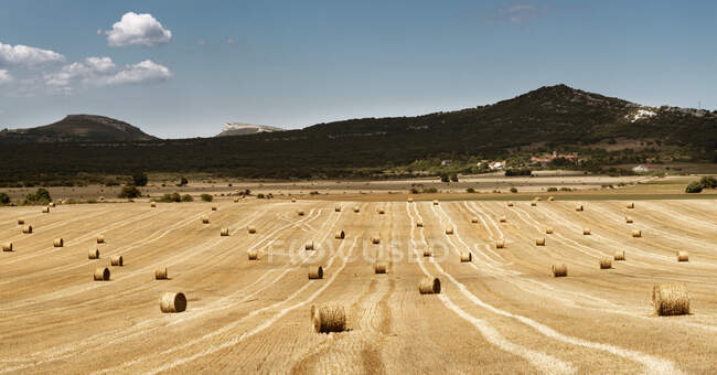 Field on farmland full of hay rolls with mountains and slightly cloudy sky as background in countryside at midday — Stock Photo