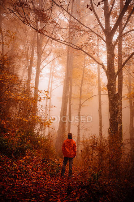 Man in forest with autumn colors among fog — Stock Photo