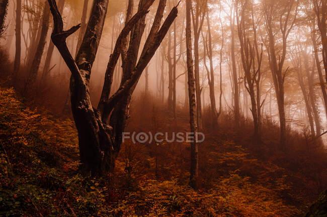 Леса с осенними красками среди тумана — стоковое фото