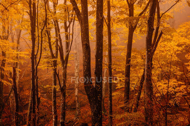 Forest with autumn colors among fog — Stock Photo