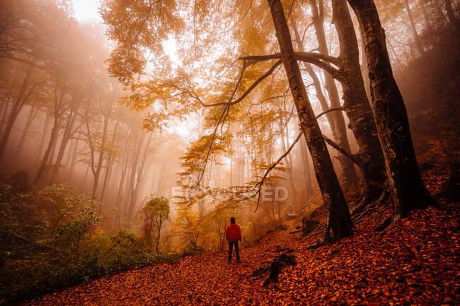 Человек в лесу с осенними красками среди тумана — стоковое фото