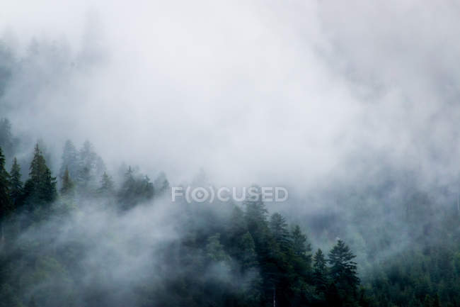 From above evergreen mysterious forest growing on stony mountains in foggy mist in Austria — Stock Photo