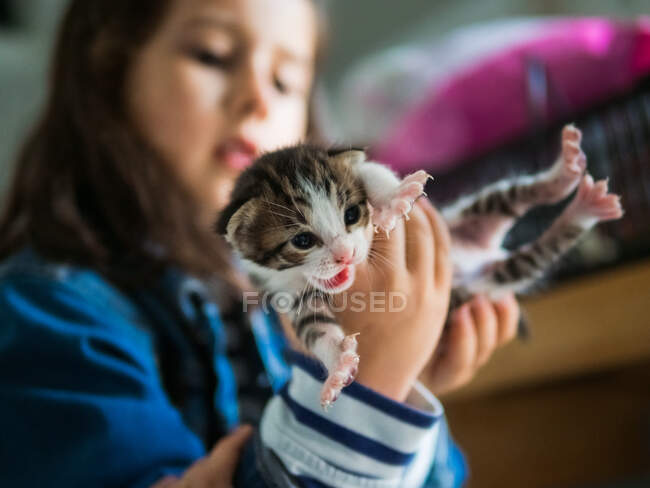 Girl playing with kitty at home — Stock Photo