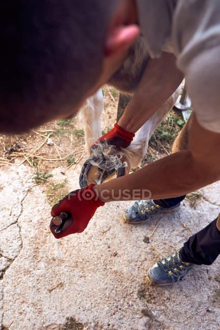 Вбитий невпізнаваний хлопчина-коваль змінює підкови в стайні — стокове фото