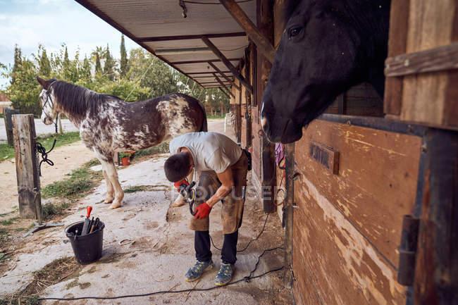 Хлопець з Блексміта змінює підкову на ногу коня, використовуючи лисі вапнякові молоти. — стокове фото