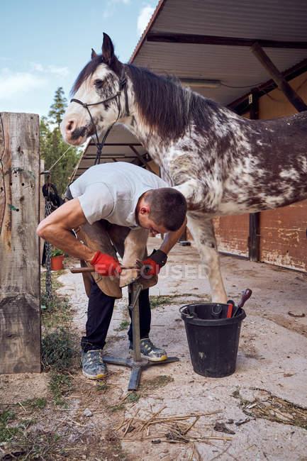 Хлопчик-рільник міняє підкови на стайні. — стокове фото