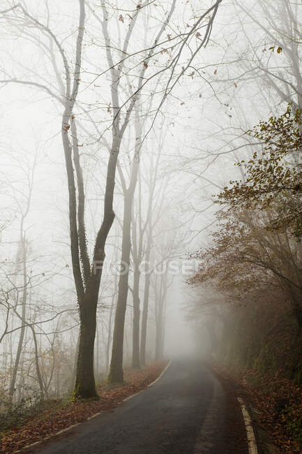 Empty road in misty autumn forest — Stock Photo
