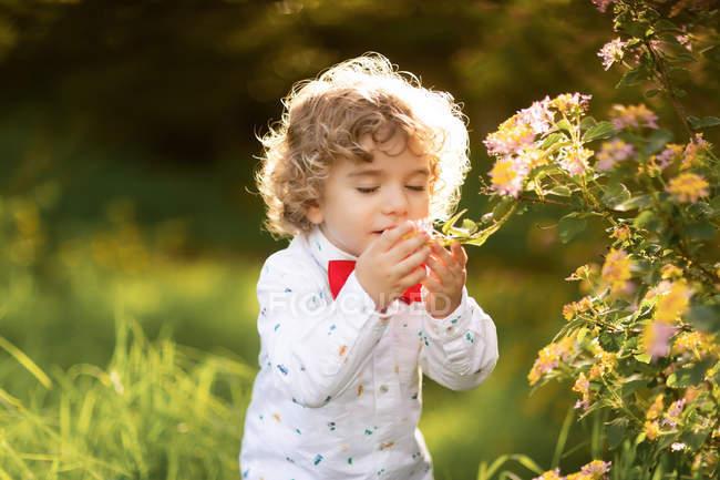 Piccolo ragazzo carino fiutare fiore nel parco — Foto stock