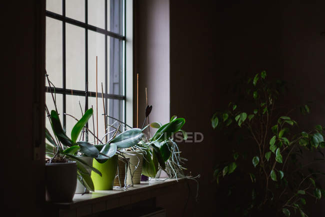 Cozy living room with different potted plants in plastic pot on sill in house — Stock Photo