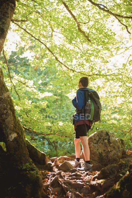 Vista posteriore di escursionista con zaino guardando la luce del sole mentre in piedi sulla collina nella foresta nella giornata estiva — Foto stock