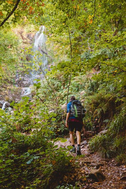 Visão traseira da mulher andando com mochila perto de cachoeira na floresta no dia de verão — Fotografia de Stock