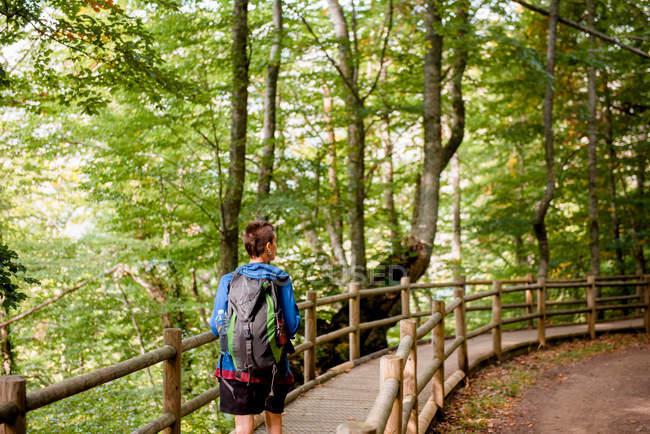 Dall'alto vista posteriore del turista in piedi sul ponte di legno e guardando il paesaggio naturale nella foresta — Foto stock