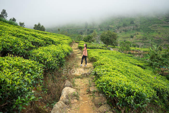 Back view of woman in casual clothes enjoying walking on rural road in tea field Haputale in Sri Lanka — Stock Photo