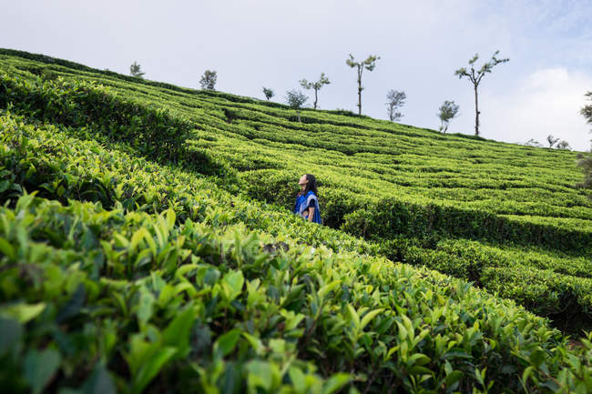 Cheerful woman in blue traditional clothes looking away while standing on tea meadows in Haputale in Sri Lanka — Stock Photo