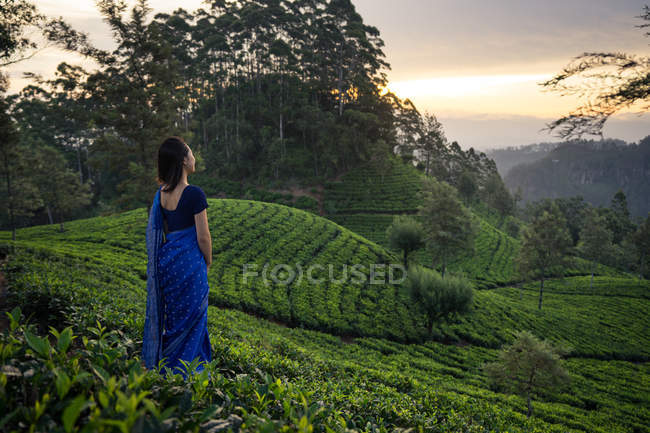 Back view of woman in blue traditional clothes looking away while standing on tea meadows in Haputale in Sri Lanka — Stock Photo