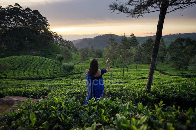 Visão traseira da mulher em roupas tradicionais azuis olhando para longe enquanto estava em prados de chá em Haputale, no Sri Lanka — Fotografia de Stock
