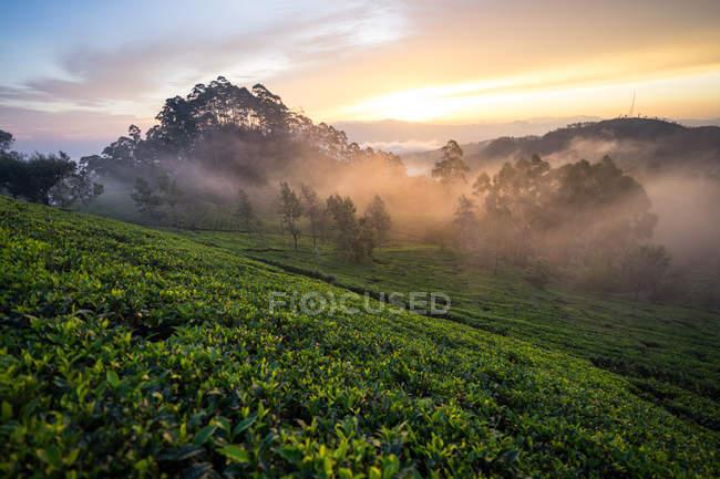 Malerischer Blick auf einen wunderschönen nebligen Morgen auf grünen Teefeldern in Haputale in Sri Lanka — Stockfoto