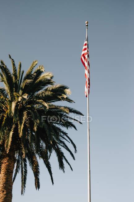 Из-под флага США и пальмы против ясного голубого неба на пляже Венеции в солнечный день — стоковое фото