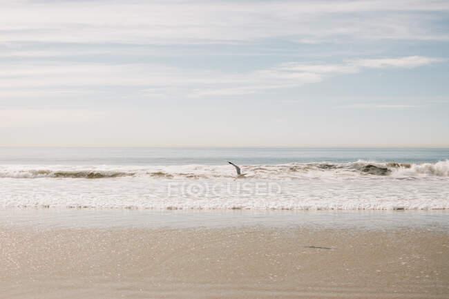 Petites vagues sur la plage de sable contre ciel nuageux et oiseau volant en Californie par une journée ensoleillée — Photo de stock