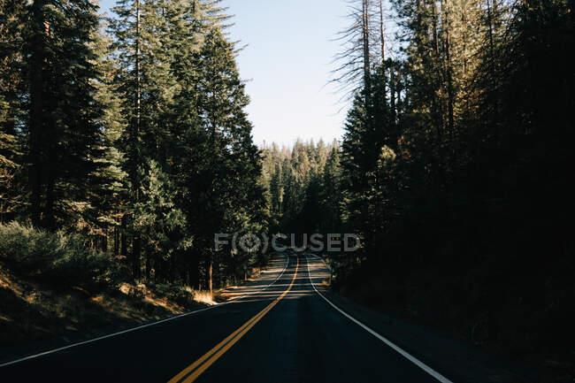 Порожня асфальтова дорога з жовтою лінією йде по високих лісових соснових деревах на Венеційському пляжі, США. — стокове фото