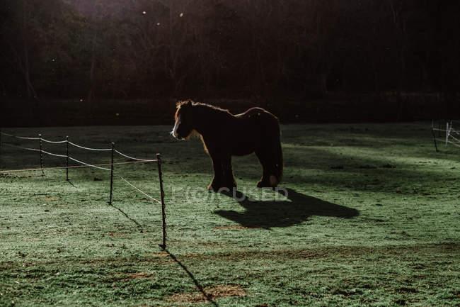 Cavallo domestico con criniera lunga in piedi dietro la recinzione nel paddock verde erboso durante il giorno soleggiato nel ranch — Foto stock