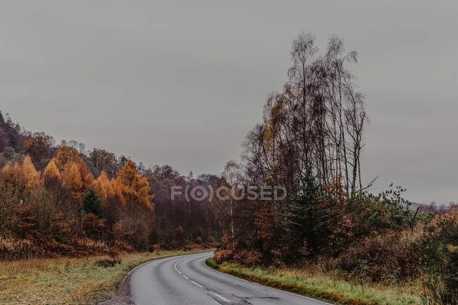 Wet asphalt road going near forest with autumn trees on gray daytime in nature — Stock Photo