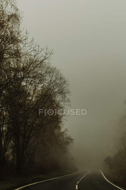 Empty straight road with mist in forest surrounded by trees foggy highway on cloudy daytime — Stock Photo
