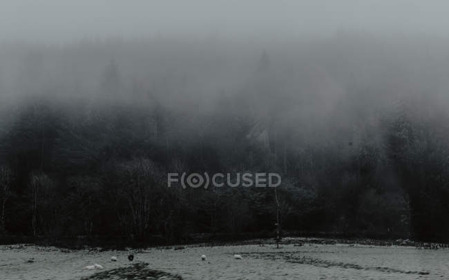 Dramatic landscape of pasture on edge of gray dark forest in foggy daytime — Stock Photo