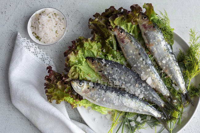 From above prepared savory mackerel served on leaves of salad with pieces of sea salt on plate on white background — Stock Photo