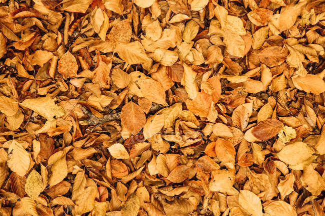 From above fallen dry colorful foliage covering ground in autumn sunny day — Stock Photo
