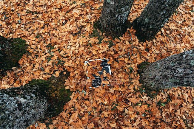 Высокий угол обзора винтажной пишущей машинки на земле, покрытой дубовыми листьями осенью — стоковое фото