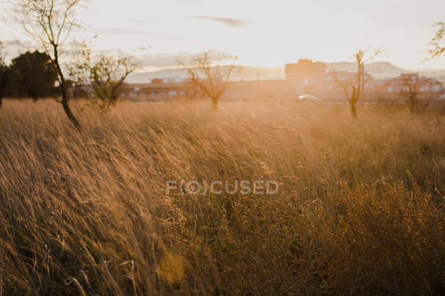 Meadow on sunny day — Stock Photo