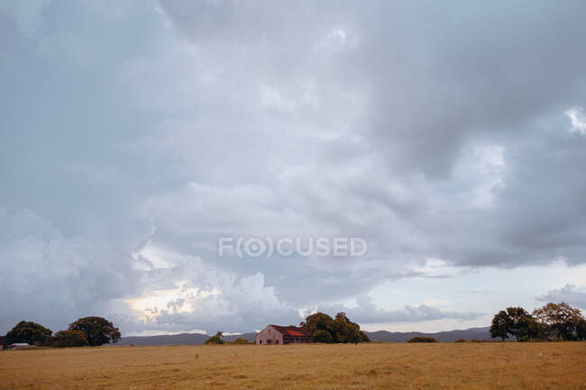 Golden empty field with small house among green trees under cloudy grey sky in Cuba — Stock Photo
