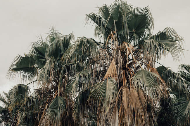 From below of dried colorful leaves of tropical palms with grey heaven on background — Stock Photo