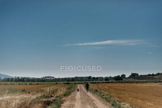 Back view of man running on empty road with dog among green fields with blue clear sky on background at countryside — Stock Photo