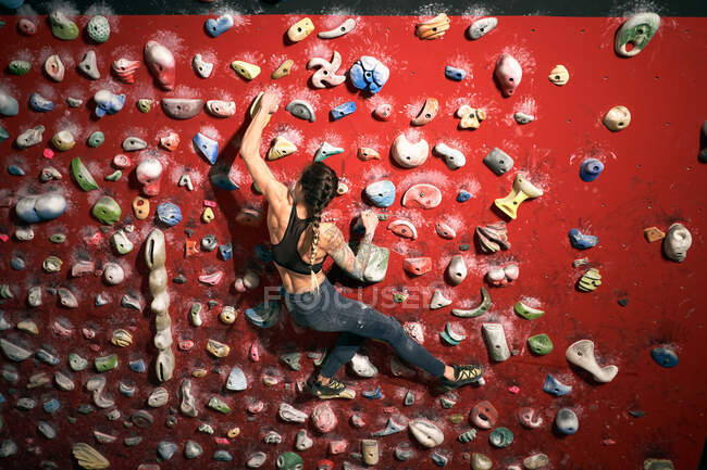 From above back view of unrecognizable athlete tattooed powerful woman climbing on colorful wall with ledges for climbers in room — Stock Photo