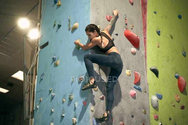 Снизу спортсменка татуировала мощную женщину, взбирающуюся на красочную стену с уступчиками для альпинистов в помещении — стоковое фото
