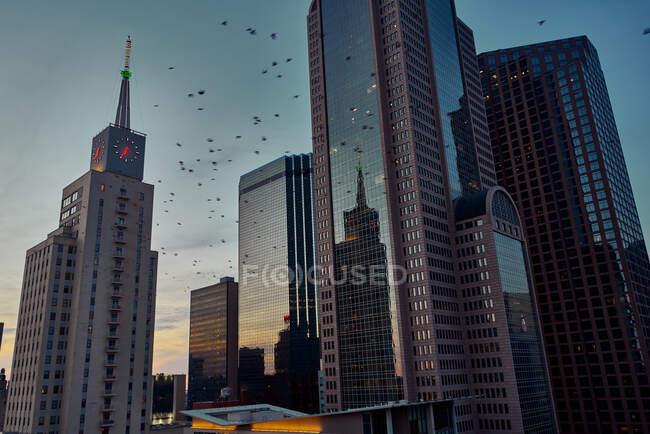 Von unten fliegen Vögel neben modernen Wolkenkratzern mit blauem Himmel in der Abenddämmerung — Stockfoto