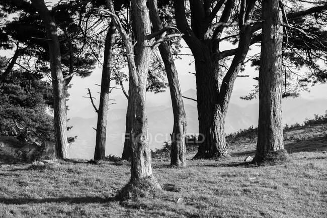 Paesaggio della foresta autunnale con vecchi grandi alberi nella foresta autunnale — Foto stock