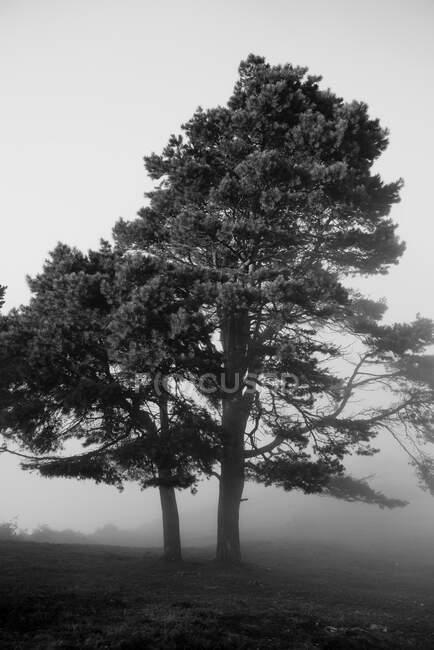 Foresta autunnale nebbioso paesaggio nuvoloso con vecchio grande albero nella foresta autunnale — Foto stock