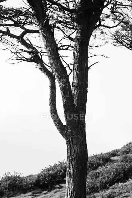 Paesaggio della foresta autunnale con vecchio grande albero nella foresta autunnale — Foto stock
