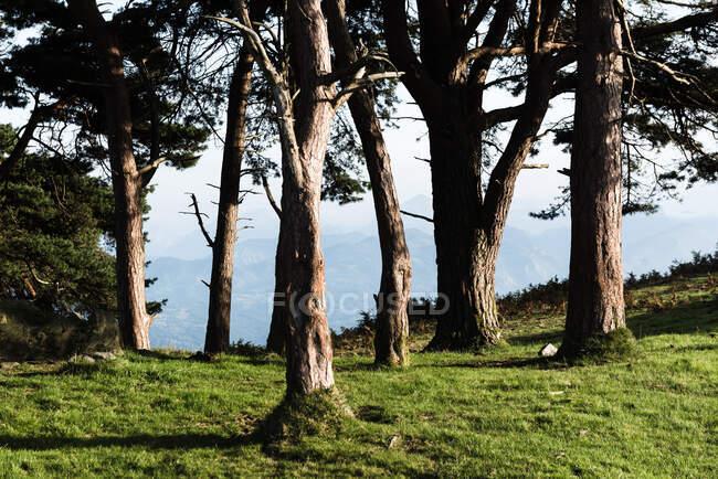Colorato paesaggio foresta autunnale con vecchi grandi alberi nella foresta autunnale nella giornata di sole — Foto stock