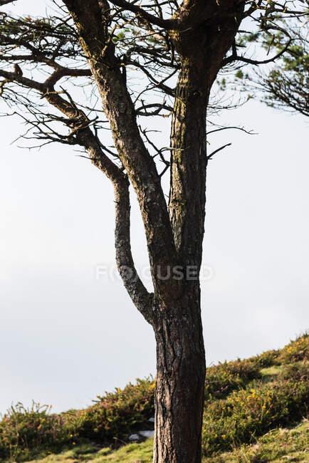 Colorato paesaggio foresta autunnale con vecchio grande albero nella foresta autunnale nella giornata di sole — Foto stock