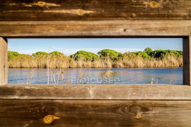 Serene landscape of dry reeds and lush green trees along clear water from wooden window in bright day — Stock Photo