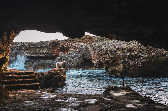 Piccolo cane in piedi sulla roccia vicino al torrente e grotta guardando la fotocamera — Foto stock