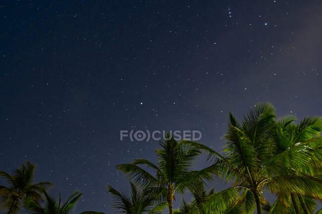 Desde abajo maravilloso paisaje de cielo nocturno con estrellas y palmeras en Punta Cana en República Dominicana - foto de stock