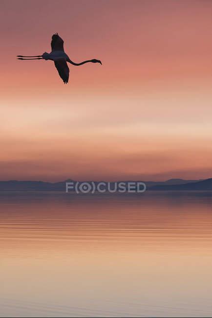 Птахи літають безхмарним яскравим заходом сонця над мальовничим порожнім озером. — стокове фото