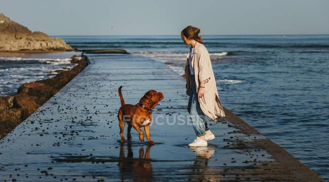 Vista lateral de la hembra en ropa casual y gran perro mastín marrón mirándose mientras caminan por el muelle de madera mojado contra el agua de la bahía tranquila bajo el cielo azul en España - foto de stock