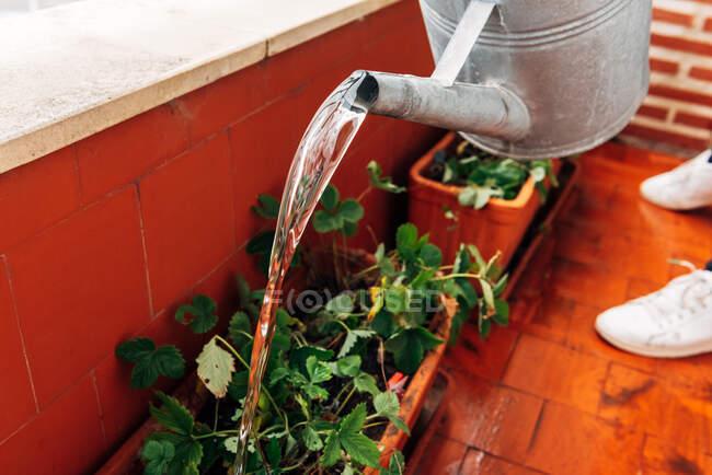 Anónimo hembra jardinero riego plantas en casa - foto de stock