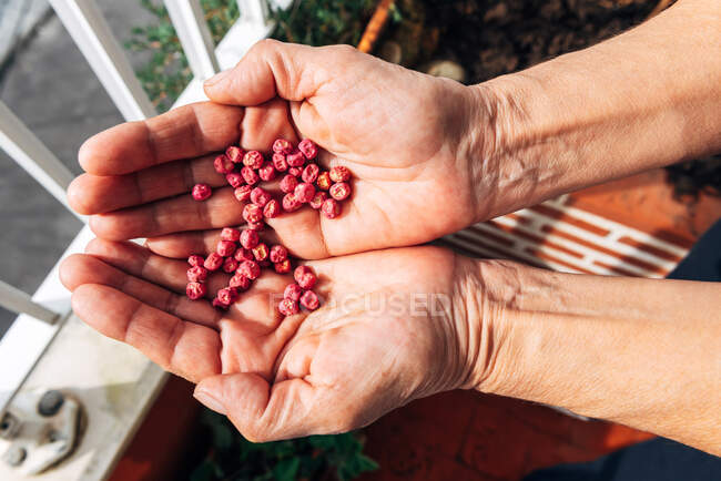 Anonymous female planting seeds in garden — Stock Photo